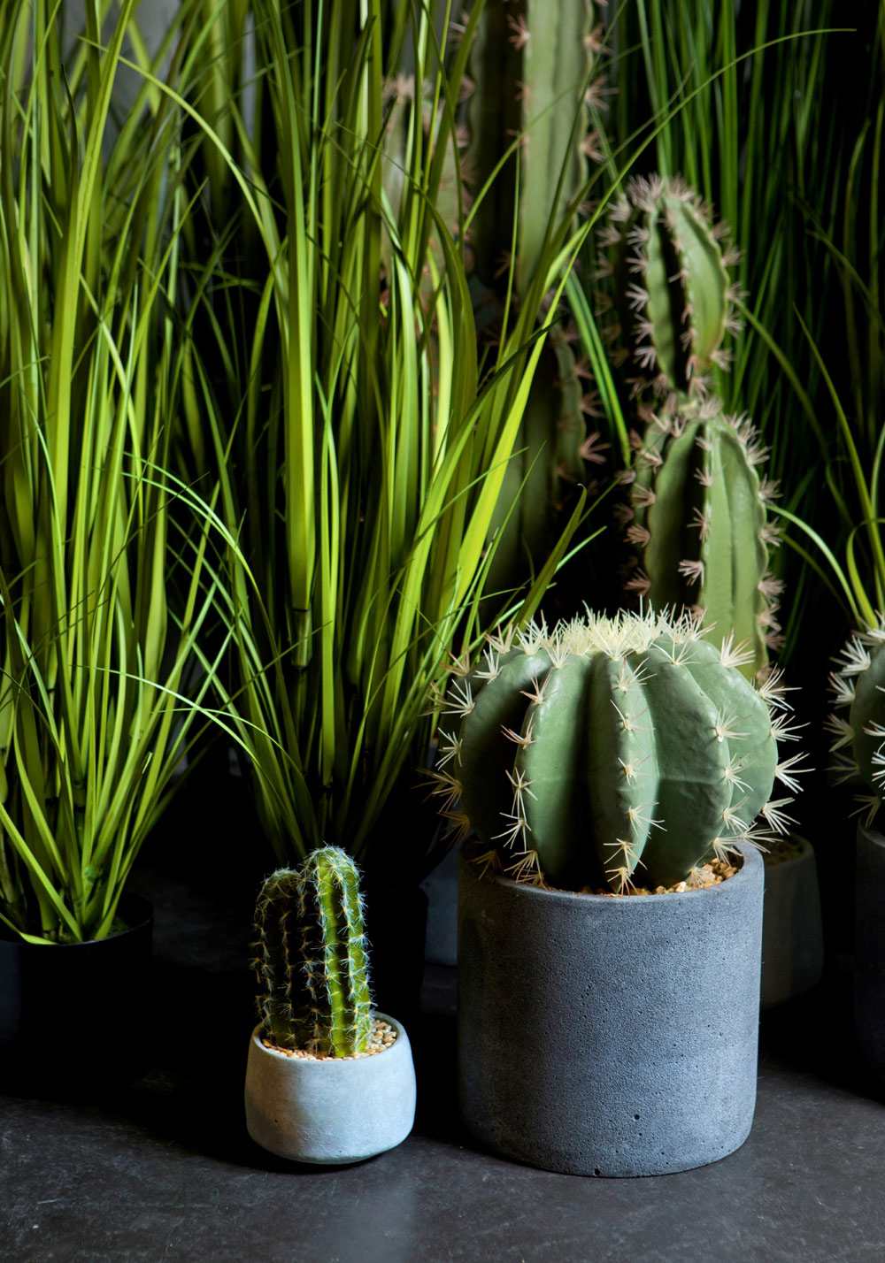 מגוון צמחי וקקטוסים לנוי ברשת IDdesign צילום יחצ ) (1) (003)